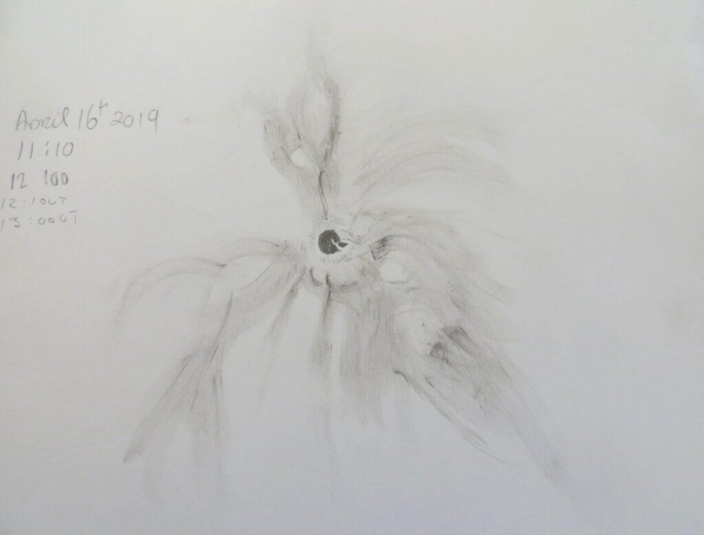 AR 2738 - An experimental h-alpha pencil sketch. PST 40, 8mm eyepiece,50X Seeing was soft, 12:10 UT - 13:00 UT April 16th 2019 Louisburgh Co Mayo. Deirdre Kelleghan