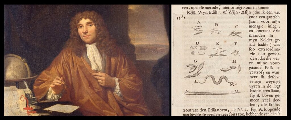 At left is a portraint of Leeuwenhoek; at right are some of his drawings, including worms.